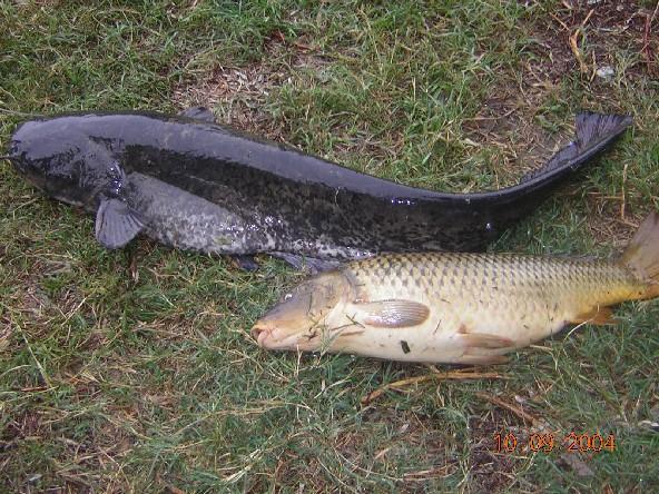 рыбалка на кривом бузане