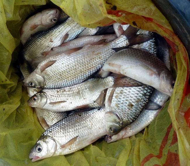 есть ли запрет на рыбалку в астрахани