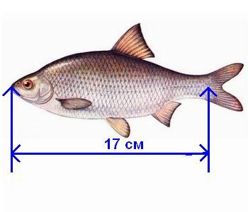 Кузьмин спиннинг практика ловли судака - Про рыбалку